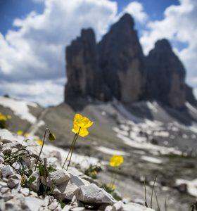 fiore+cime