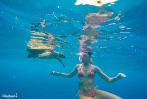 Incontro con la tartaruga marina