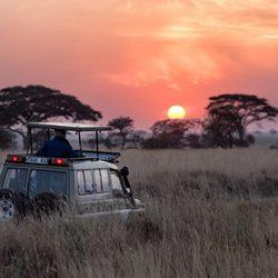 Safari africani